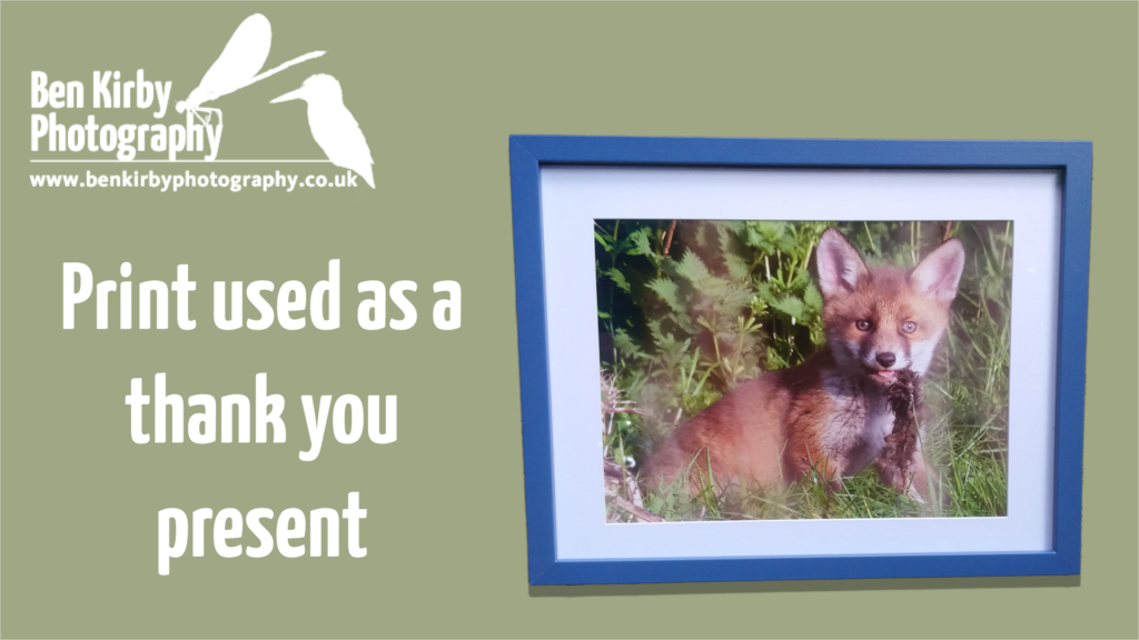 Fox Cub Print Used As Thank You Present