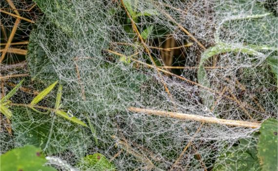 Mass Of Cobwebs (BKPWEAT00012)